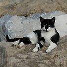 Cat by Pawel J