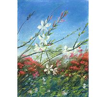 Wildflowers - blue horizon_Pastel painting Photographic Print