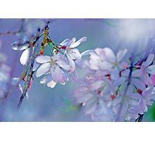 Dappled Light Through the Tree Photographic Print