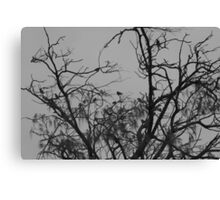 Nature in monochrome Canvas Print