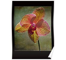 Kaleidoscope Orchid Card Poster