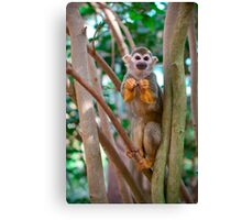 Little Monkey Canvas Print