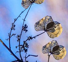 Tripple leaves on orientalish background by john forrant