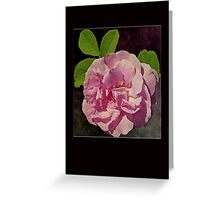 Pink Rose Card Greeting Card