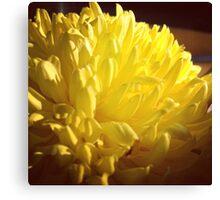 shining flower Canvas Print