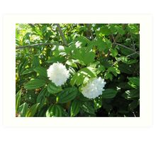 White Flowers from the Pacific Northwest Art Print