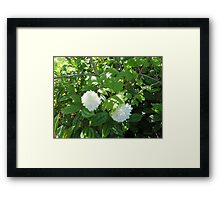 White Flowers from the Pacific Northwest Framed Print