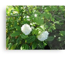 White Flowers from the Pacific Northwest Metal Print
