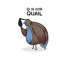 Q is for Quail Photographic Print