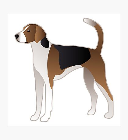 American Foxhound Basic Breed Silhouette Photographic Print
