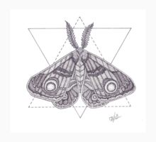 Dotwork Moth by accio-muse