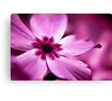 Pink Dwarf Phlox flower Canvas Print