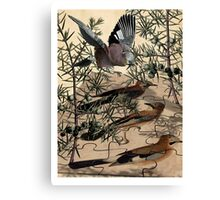 A Jay Jostles In Juniper Canvas Print