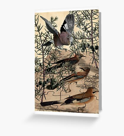 A Jay Jostles In Juniper Greeting Card