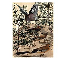 A Jay Jostles In Juniper Photographic Print