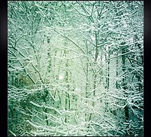 Winter Wonderland by EclecticDesigns