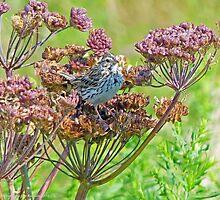 Savannah Sparrow and flowers by warriorwoman