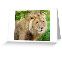 716 king Greeting Card