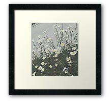 Daisy Film Framed Print