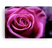 Soft Pink Rose Macro Canvas Print