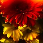Gerbera and Daisy by David J Baster