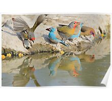 Colorful Birds from Africa - Flutter of Beauty Poster