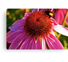 Pollenation Canvas Print