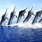 Black Marlin Jump Sequence by blackmarlinblog