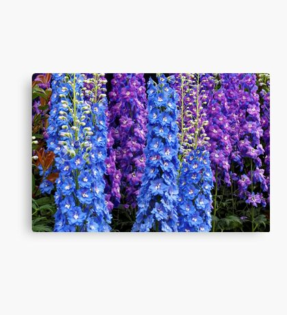 Blue and Purple Delphinium Border Canvas Print