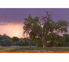 Lightning In The Woods Photographic Print
