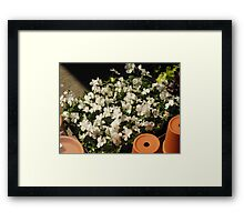 White Pansies and Flower Pots Framed Print