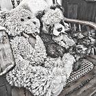 MA and PA Teddy by Steve Randall