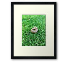 Compliments Of The Chef Framed Print