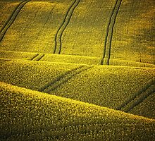 Golden Fields by JBlaminsky