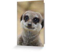 Cute Meerkat Greeting Card