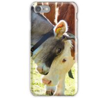 sweetness of cows grazing in the mountains iPhone Case/Skin