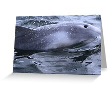 Surfacing, Gulf St Vincent Greeting Card