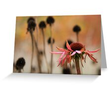 Echinacea and seedheads Greeting Card