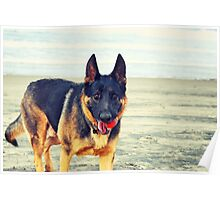 Zeke at the Beach Poster