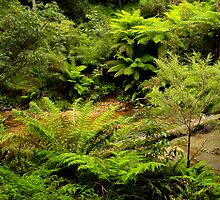 Leura Cascades, Blue Mountains, NSW by Emily Wilson