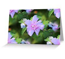 Purple Rose Of Sharon Greeting Card