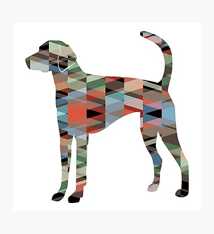 American Foxhound - Colorful Geometric Pattern Silhouette - Plaid Photographic Print