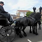 Black Friesians by kathrynsgallery