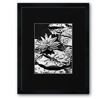 Liquid Silver in the Sun Framed Print