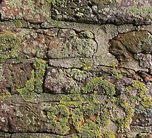 Lichens on bricks  by Andrew Felton