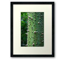 Kapok Tree Framed Print