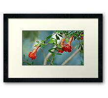 blooming grenades Framed Print