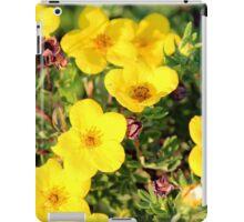 Shrubby Cinquefoil - Dasiphora fruticosa subsp. floribunda (Pursh) Kartesz iPad Case/Skin