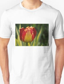 Sparkles and Warmth - a Red and Yellow Tulip in the Spring Rain Unisex T-Shirt