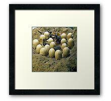 dino's eggs Framed Print